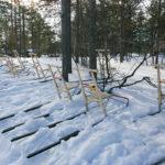 Luges typiques de Laponie