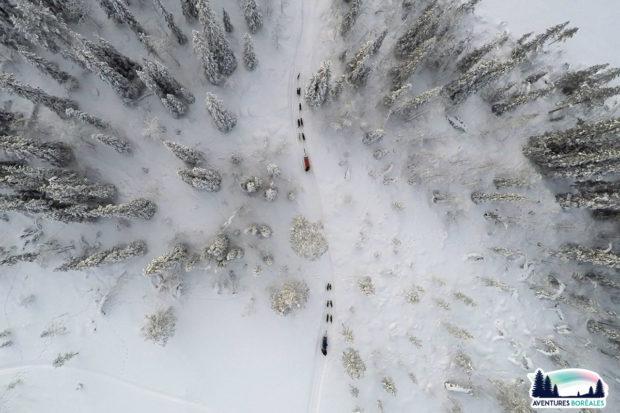Balade en chiens de traineau en Laponie