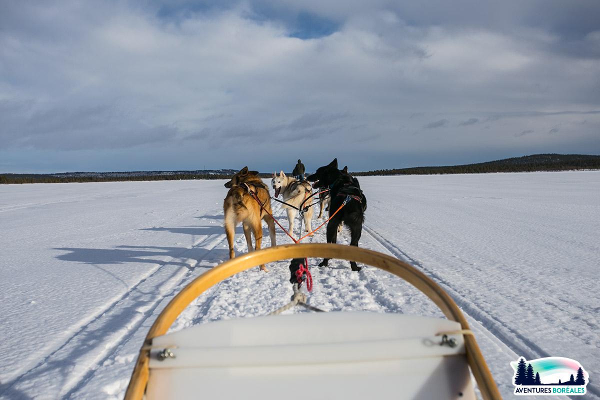 Faire du chiens de traineaux en Laponie