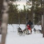 Rando en chiens de traineau en Finlande
