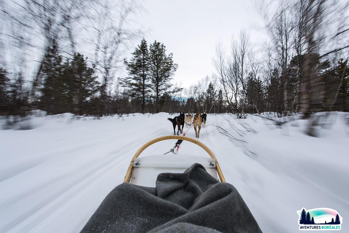 Randonnée en chiens de traineau en Finlande