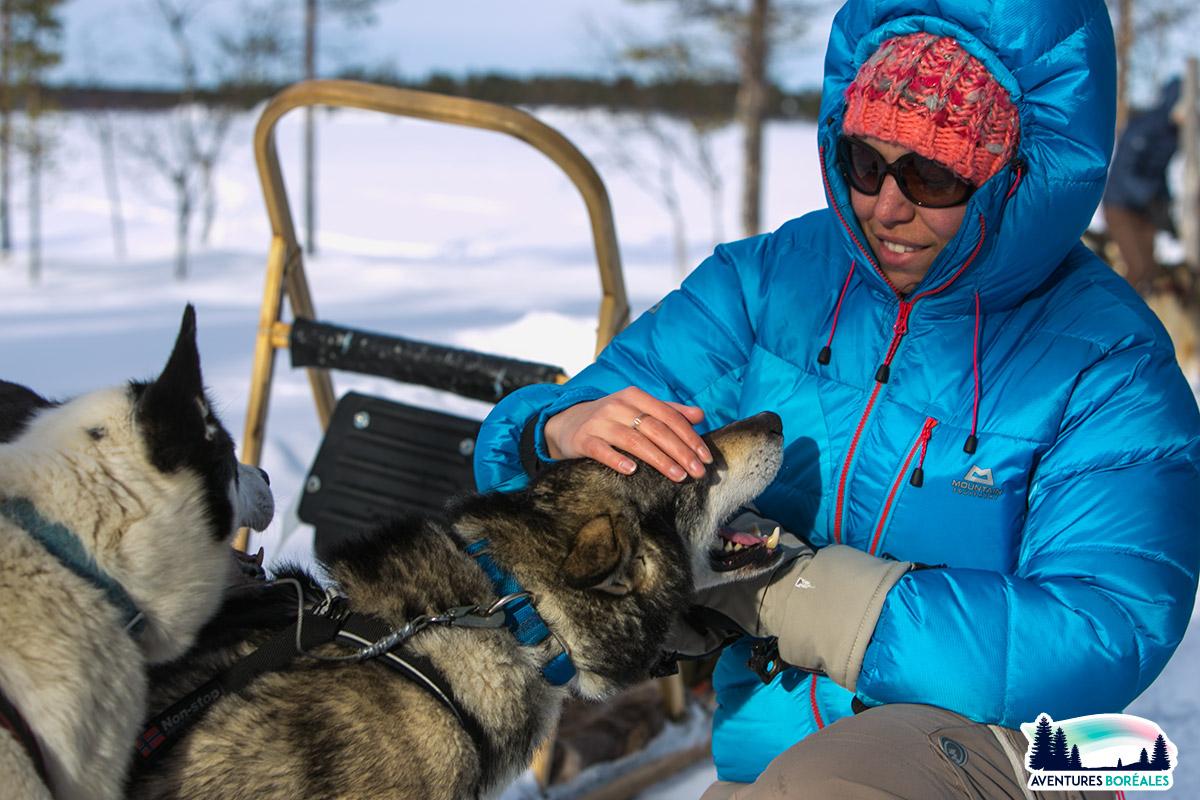 Randonnée en chiens de traineau en Laponie
