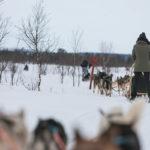 Randonnée en traineau à chiens en Laponie