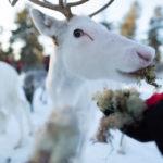 Rencontre avec l'éleveur de rennes