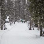 Balade dans la forêt finlandaise